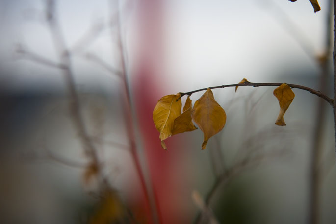 leaves on a branch